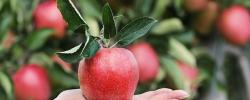 Fructoseintoleranz - wie kann der Internist helfen?
