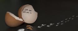 Hühnereier auf dem Speiseplan?  Ein aktueller Zwischenstand der Ei-Debatte